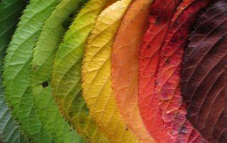Regenbogen aus Herbstblättern